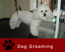 Dog Grooming, East Kilbride, Hamilton